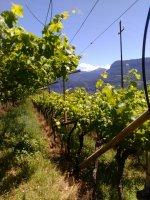 Südtirol/Alto Adige