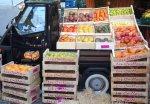 Geschenkgutschein - Pane, Provolone und Primitivo – die Küche Apuliens