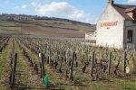 Geschenkgutschein - Das Burgund - einzigartige Weine!