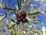 Geschenkgutschein Griechenland - einzigartige Rebsorten & vielfältige Terroirs!