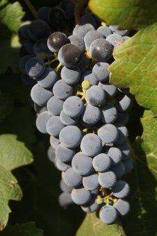 Südamerika Weinreise-Tango für die Zunge Sa. 8. Mai 2021