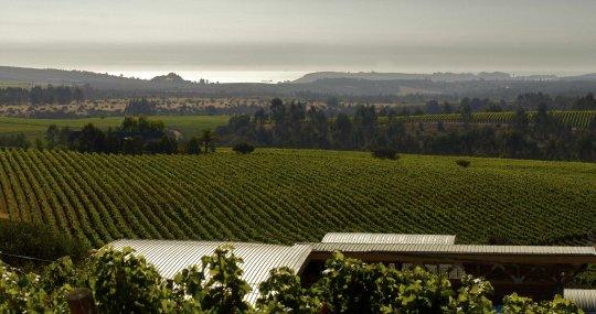 Trendrebsorte Sauvignon Blanc@Home Sa. 04.09.2021