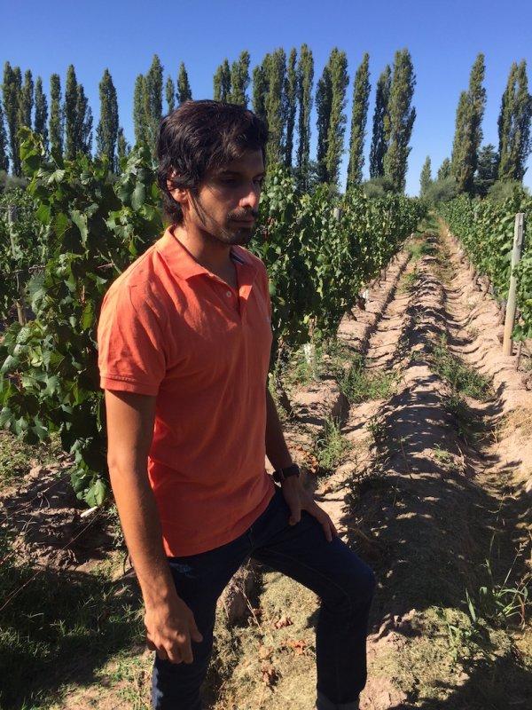 2010er Arinzano Gran Vino Blanco
